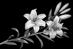 207 лилии