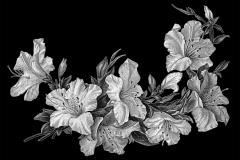 lilii2_32